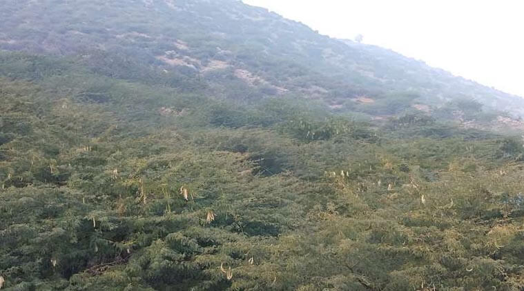 The endangered flora of the Aravalli Mountains will be protected in the Sylvan Biodiversity Forest being built in Jaipur.